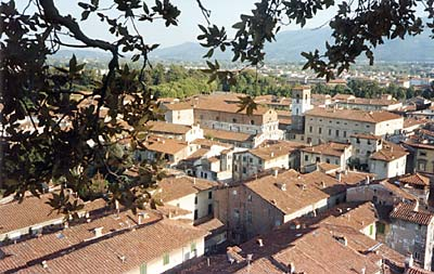 Lucca rooftops picture